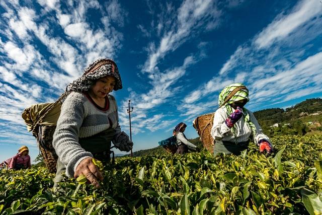 la cosmopolitana duenos, que es la agricultura familiar, covid afecto la agricultura familiar